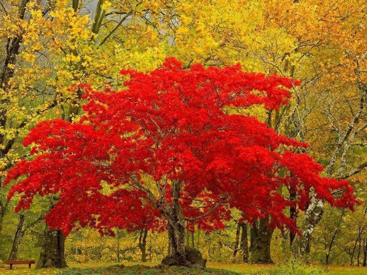 tree image 52
