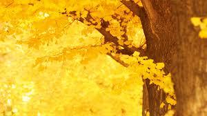 tree image 53