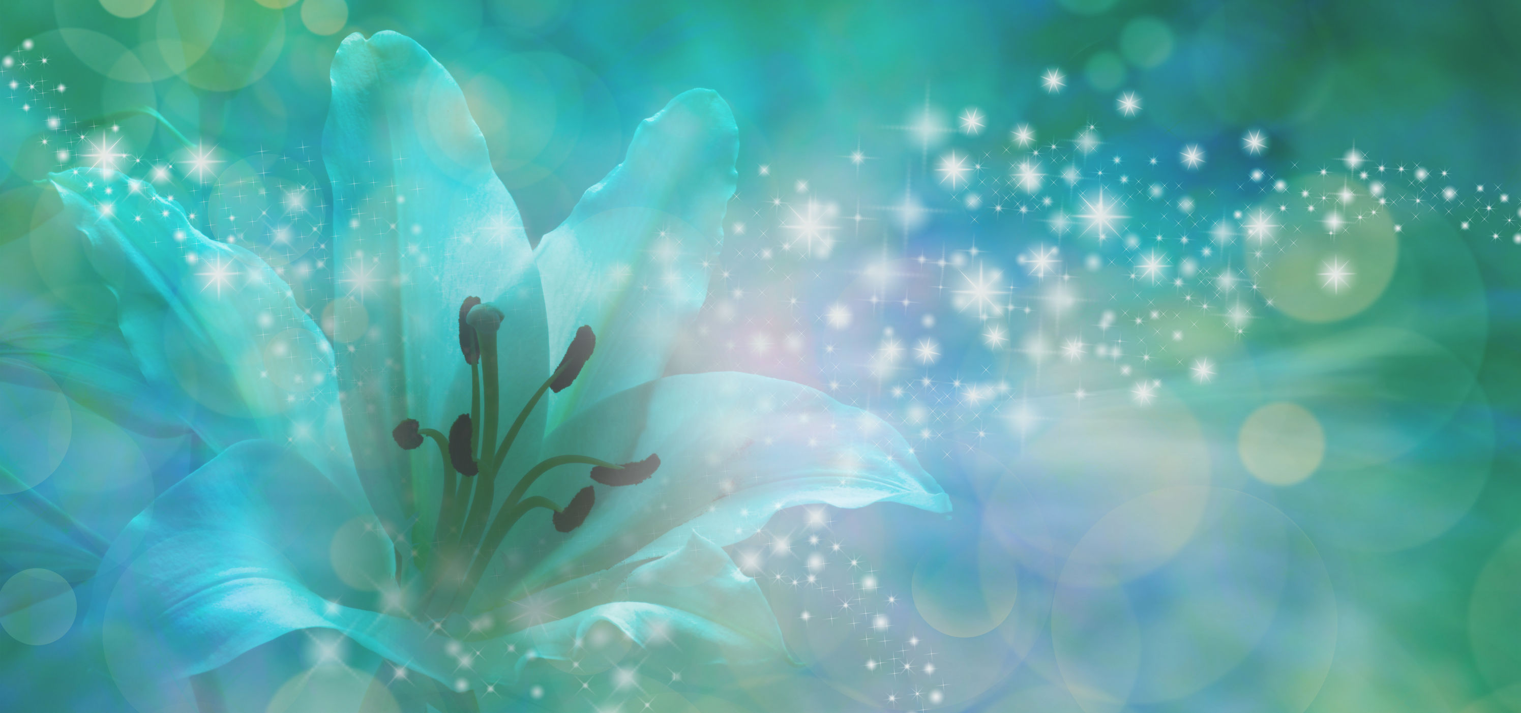 58959253 - sparkling lilly banner - beautiful  lily head with glitter and sparkles radiating outwards from the center on a jade green and blue bokeh background with copy space