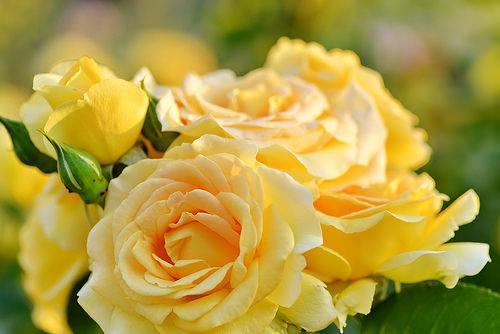 new flower 7