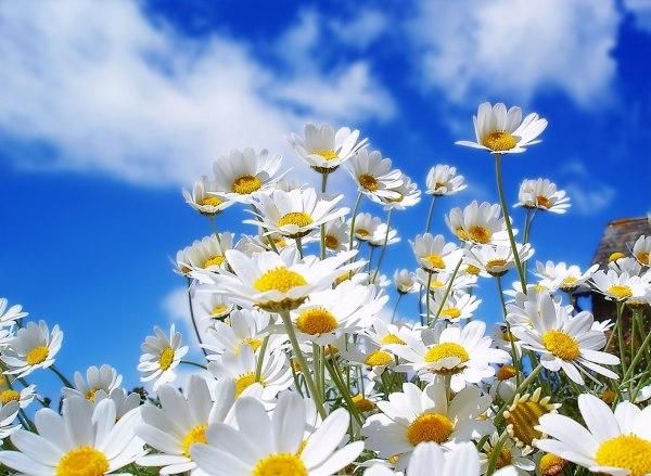 new flower image