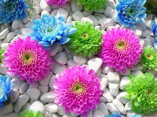 flower image 10