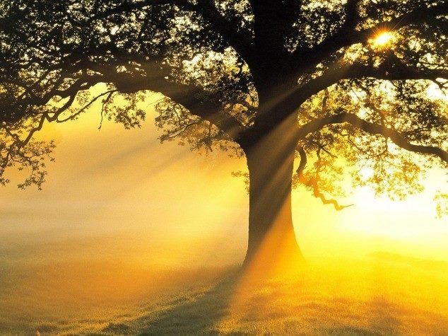 tree image 24