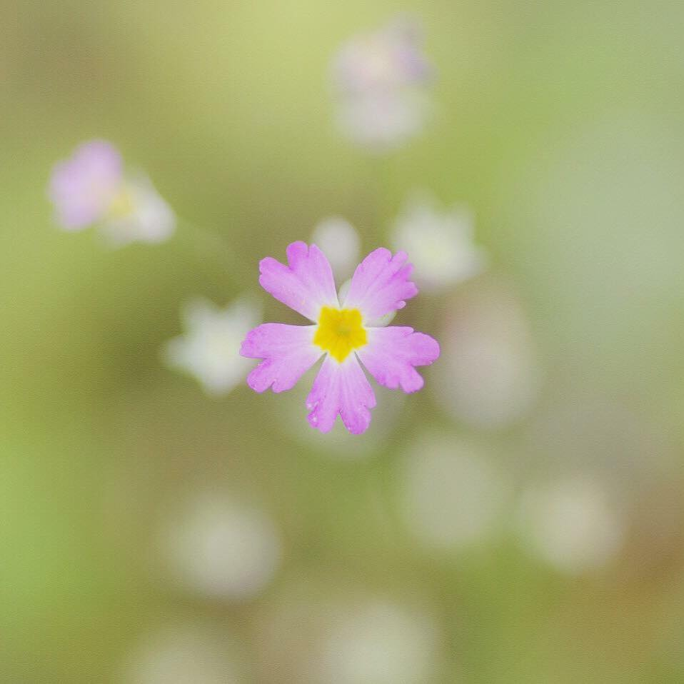 flower image 1